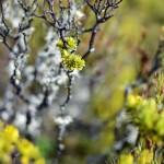 Moss balancing in New Zealand brush