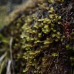 Damp moss near Arthur's Pass, New Zealand