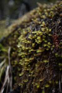 Damp moss near Arthur's Pass, New Zealand
