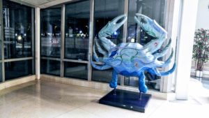 A crab sits in the lobby of the Institute of Marine and Environmental Technology (IMET)